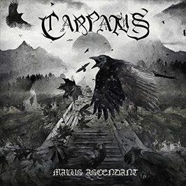 Carpatus - Malus Ascendant-thumb